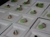 festival-cuisine-sante_042